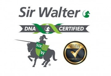 Sir Walter - $12.25 per square metre